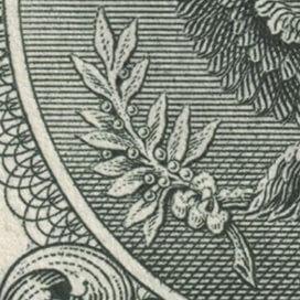 rama-olivos