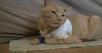 La increíble hazaña del gato héroe que salvó a sus dueños