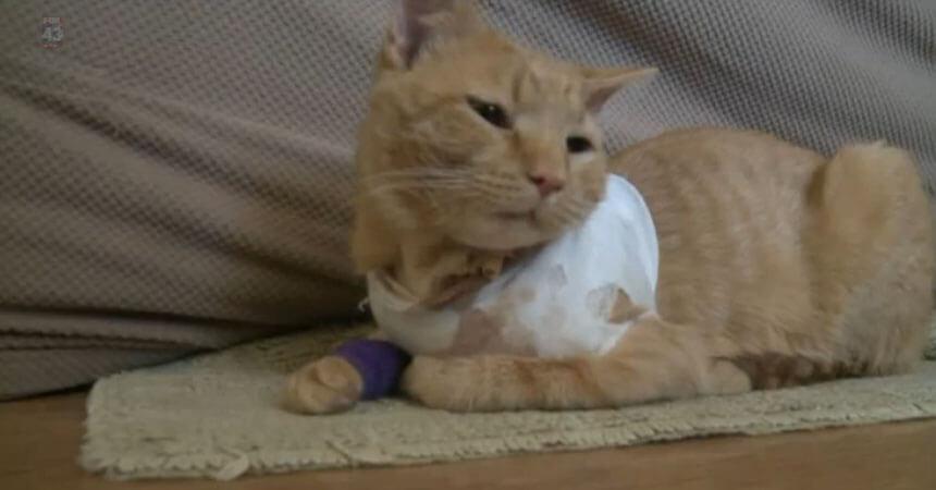 La increíble hazaña del gato héroe que salvó a sus dueños - AYAYAY d04ac14ba3e1