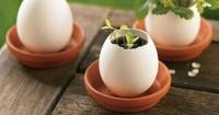 7 usos que puedes darle a las cáscaras de huevos en lugar de tirarlas a la basura