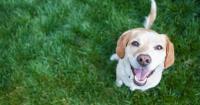 6 razones científicas que te convencerán de tener un perro