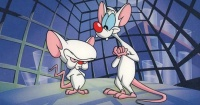 ¿Cuánto tiempo llevan estas ratas tratando de conquistar el mundo?
