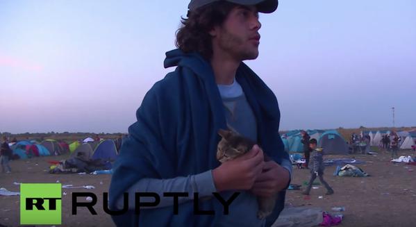 """""""Este es Johnny, el gato que viajo todo el camino desde Siria"""""""