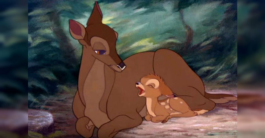 bambi foto 860