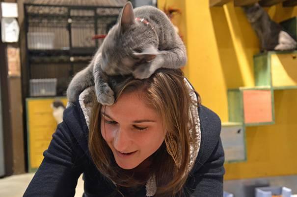 cat16
