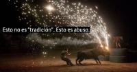 """5 horribles """"fiestas"""" donde el maltrato animal es parte de la diversión"""