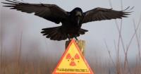 Chernobyl: el enorme paraíso de animales radioactivos