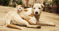 Ya viene Patricia: Esto es lo que debes hacer con tus mascotas durante el huracán