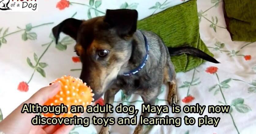 Lloremos lince, mira la historia de Maya.