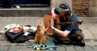 La increíble historia de este gato que ayudó a su dueño a salir de las drogas