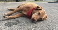 El fiel perro Paco se quedó esperando horas a su dueña atropellada y ella no volvió