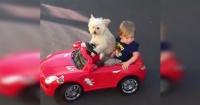 VIDEO: Impresionante perro pistea como un campeón en las calles