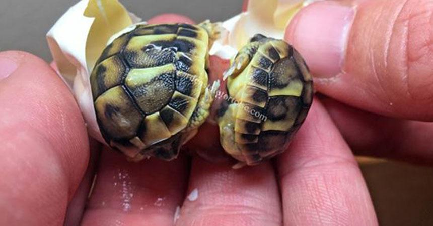 portada-tortugas