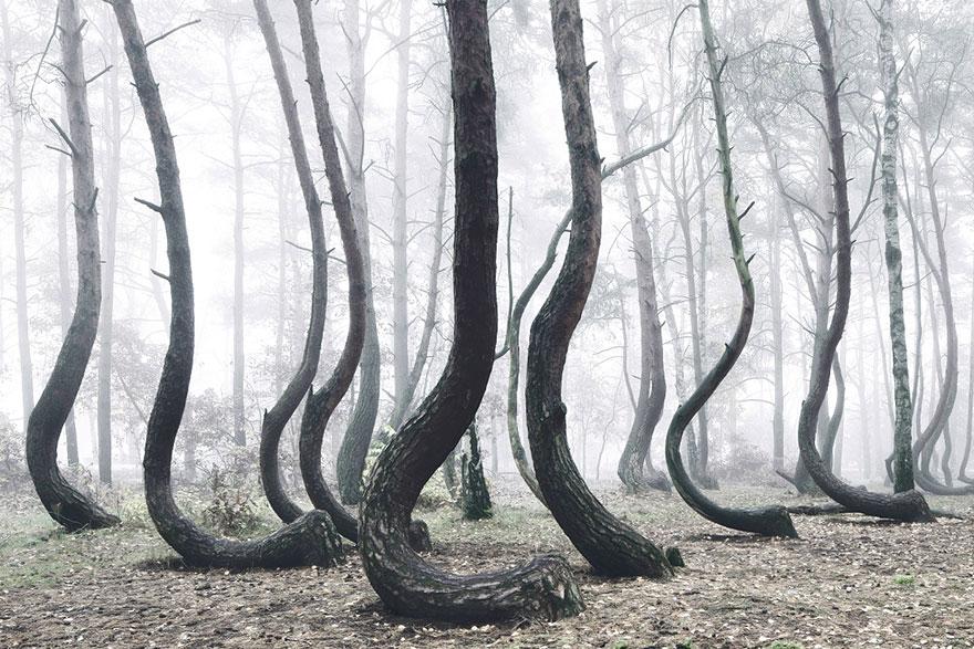bosque3