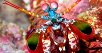 Conoce al animal más hermoso, colorido, y letalmente violento del mundo submarino