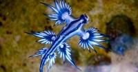 Esta misteriosa criatura marina 'de otro mundo' apareció en una playa australiana