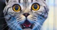 ¿Por qué los gatos se espantan con los pepinos?