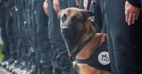 Diesel: El perro al que Internet le rinde homenaje por dar su vida por Francia