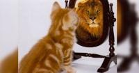 Estudio revela que tu gato podría asesinarte porque se cree un mini león