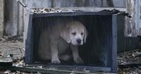 Esta es la forma más rápida para encontrar a tu mascota perdida