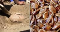 Científicos plantan semillas de 800 años de antigüedad y el resultado es increíble