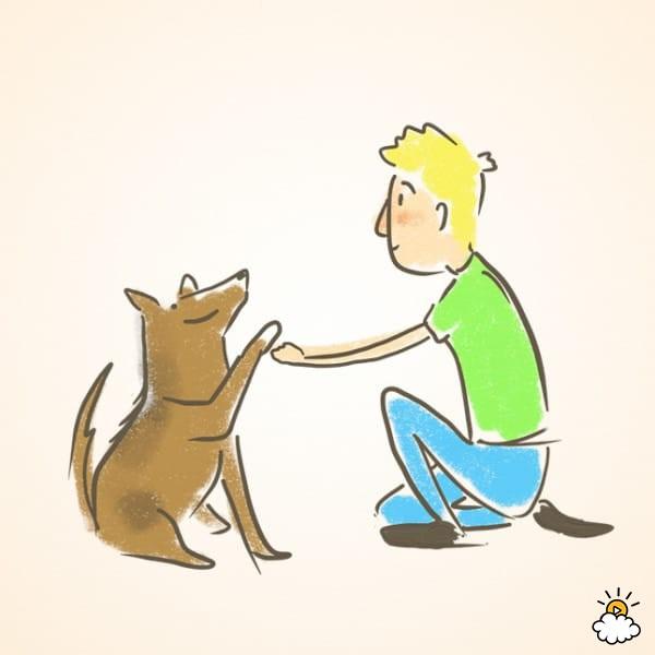 """Ten una deliciosa recompensa en la mano, cerca del suelo. Dile a tu perro que te de """"la mano"""". Cuando tu perro levante la pata, tu levanta la mano más arriba. Si tu perro eleva su pata a tu altura, dale la recompensa. Repite esto hasta que tu perro levante su pata a una altura suficiente para que te de la mano."""