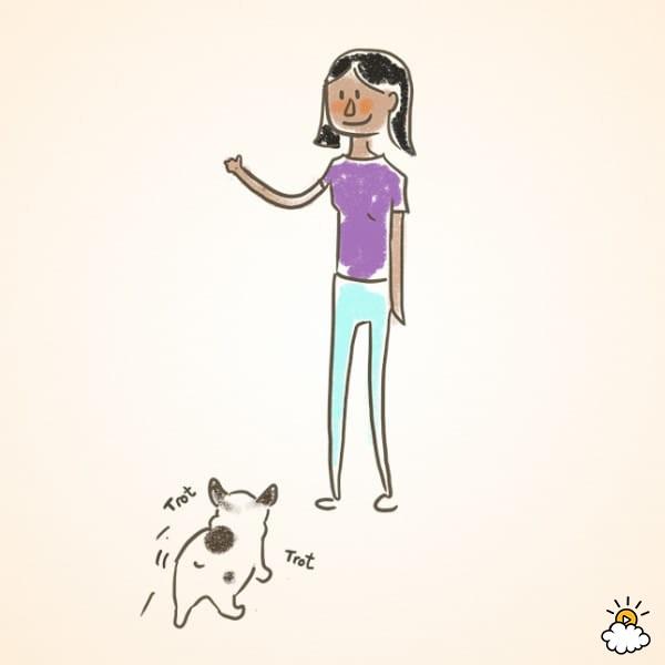 """Ponte de pie frente a tu perro y dile que """"venga"""". Si la hace, dale un premio. Repetir hasta que se acerque cada vez que lo digas."""