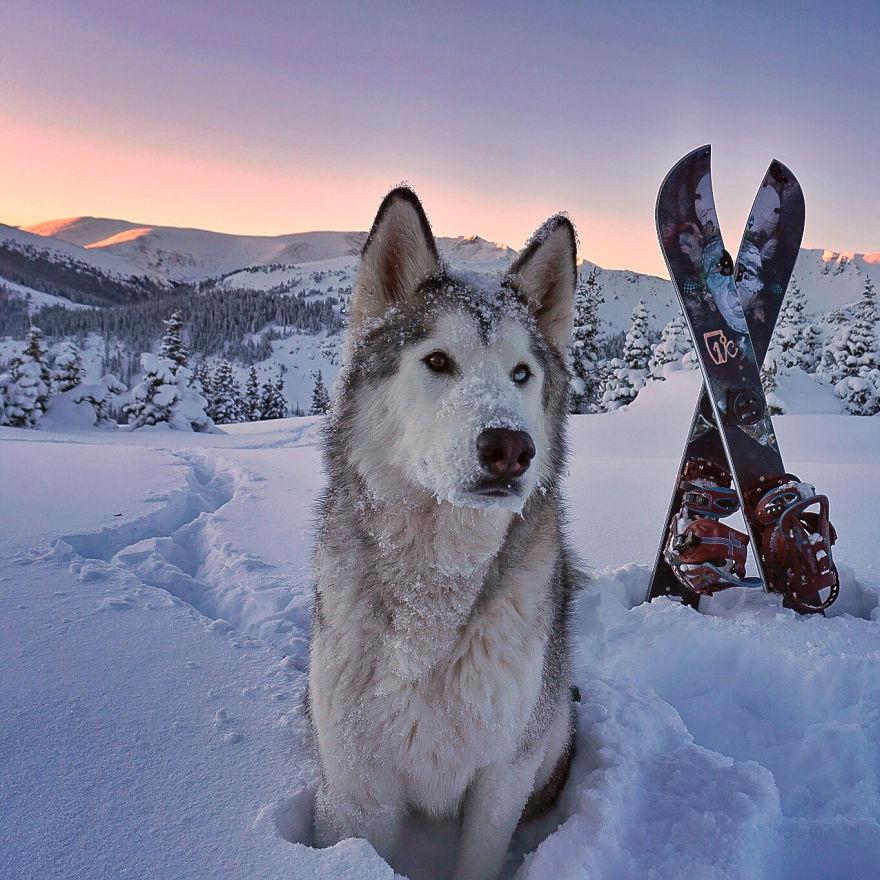 Loki-the-Wolfdog1__880