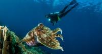 Esta gigantesca criatura marina hará que no quieras volver a sumergirte jamás