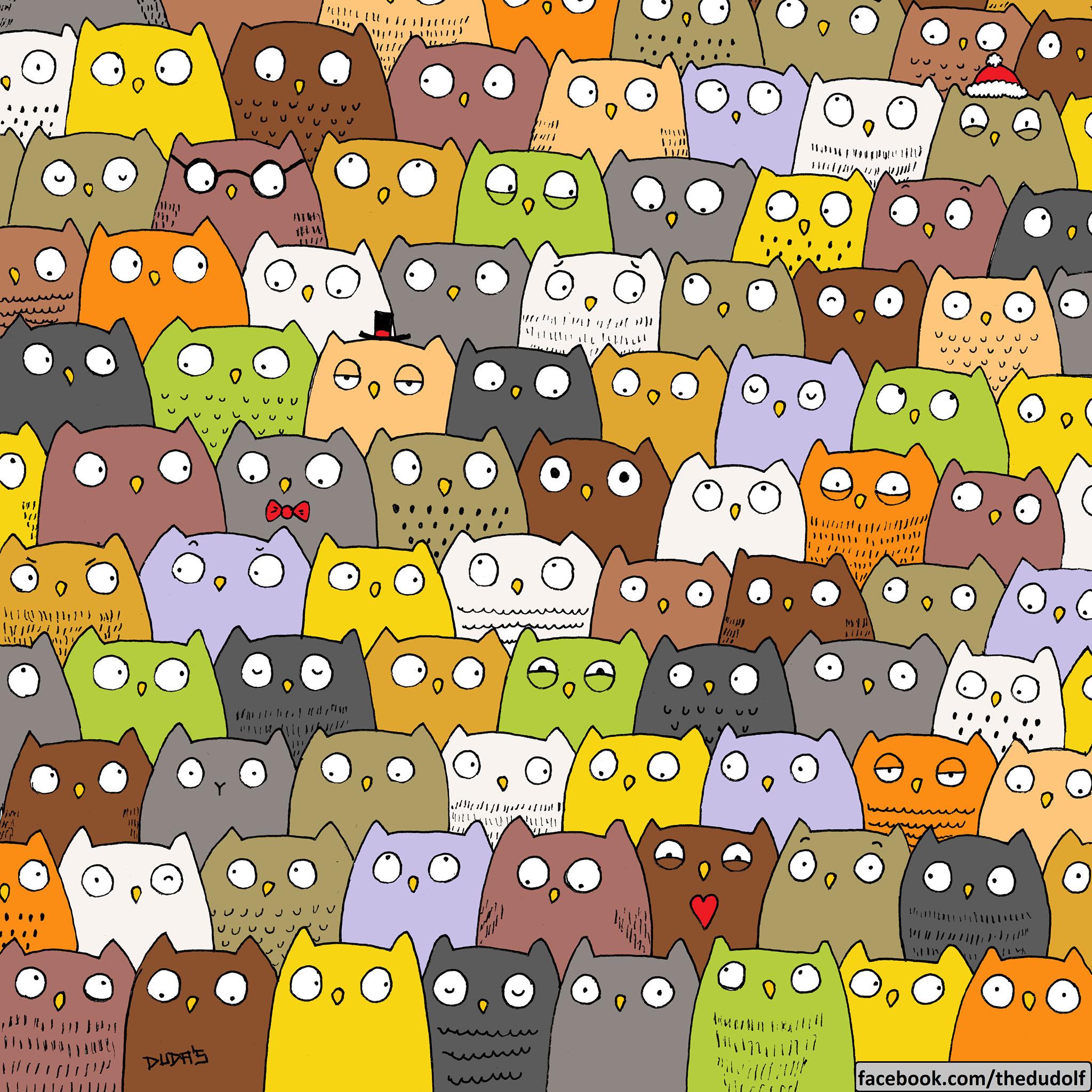 gato-buhos
