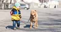 ¿Tu hijo quiere una mascota? Estas 6 razones te convencerán de decirle que sí