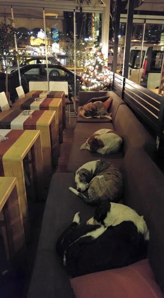 perros-cafe