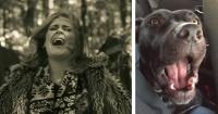 """El extraño fenómeno de los perros que cantan """"Hello"""" de Adele"""