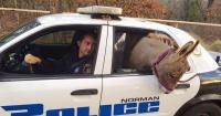 Este policía rescató a este burro de ser atropellado y mira cómo se lo agradeció