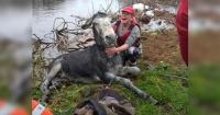 La graciosa forma en que este burro agradeció ser rescatado de un río