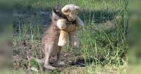 La foto de este canguro enamoró a todo Internet