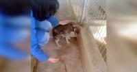 La emotiva reacción de un perro al ser acariciado después de años de maltrato