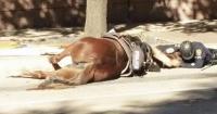 La emotiva foto de un policía despidiendo a su caballo cuando cumplía su deber