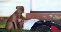 Así cuida esta perrita a su dueño herido tras incendiarse su casa