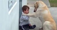 Este niño con Síndrome de Down jugaba solo y este perro se convirtió en su mejor amigo