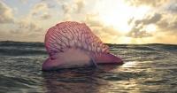 Esta es una de las más terroríficas criaturas que te puedes encontrar en la playa