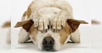 La milagrosa técnica para que tu perro no sufra con los fuegos artificiales