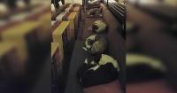 Un café abre sus puertas por las noches para que los perros sin hogar duerman ahí