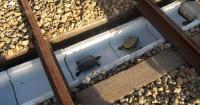 En Japón crearon túneles para que estas tortugas estén a salvo