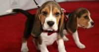 Nacieron los primeros perritos de fertilización in vitro ¡y son adorables!