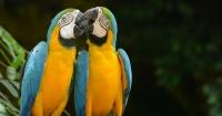 5 lecciones de seducción que podemos aprender del reino animal