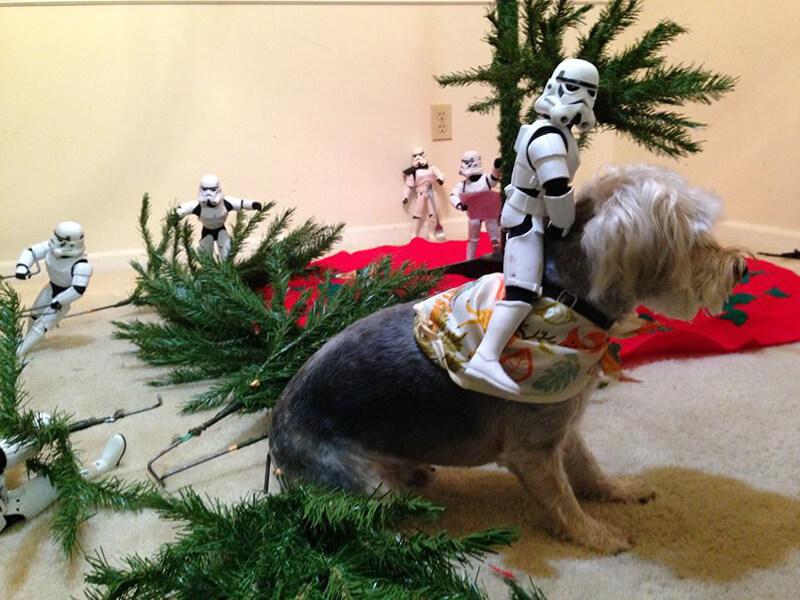 stormtrooper14