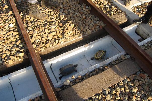 tortugas01