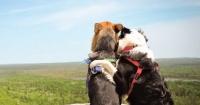 Estos perros son los mejores amigos y están rompiendo corazones por todo Internet