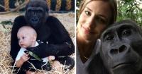 Reina de la jungla: creció rodeada de gorilas y su reencuentro es conmovedor